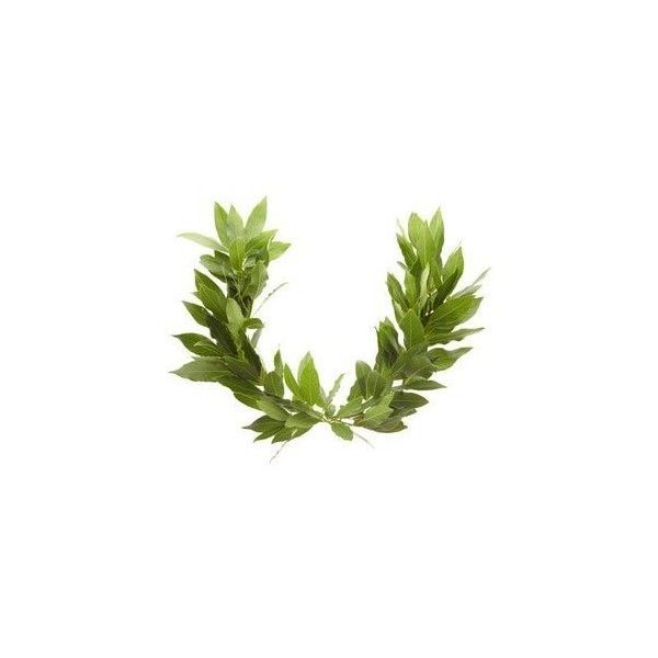 Make A Laurel Wreath For Children Olympics Using Two Real Bay Leaf Branches And Some Wire Laurel Wreath Laurel Wreath Crown Laurel Crown Check out our greek leaf crown selection for the very best in unique or custom, handmade pieces from our wreaths & tiaras shops. laurel wreath crown