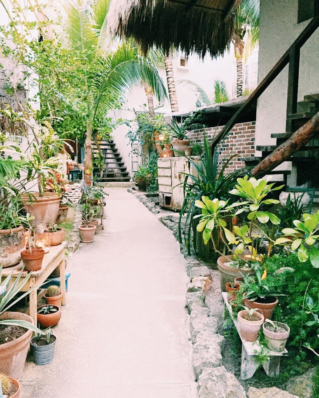Pin by Sarah Aristizabal on Plants | Mediterranean garden ...