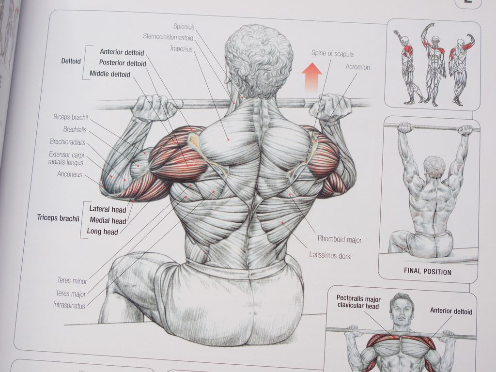 Pin ni David sa Strength Training Anatomy | Pinterest