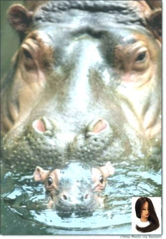 #Animals #Baby #bath #Hippo #MAMMA #mom #mom and baby bath #Baby #bath #Hippo #MAMMA #mom and baby animals hippo BAth - Mamma & Baby♥♥ ...        #Baby #bath #Hippo #MAMMA #mom and baby animals hippo BAth - Mamma & Baby♥♥        hippo BAth - Mamma & Baby♥♥ #babyhippo #Animals #Baby #bath #Hippo #MAMMA #mom #mom and baby bath #Baby #bath #Hippo #MAMMA #mom and baby animals hippo BAth - Mamma & Baby♥♥ ...        #Baby #bath #Hippo #MAMMA #mom and baby animals hippo BAth - Mamma & B #babyhippo