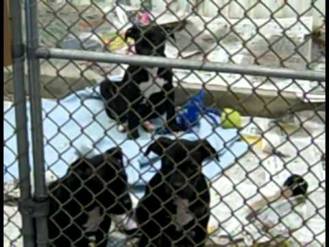 The Association for Needy & Neglected Animals: Pennsylvania