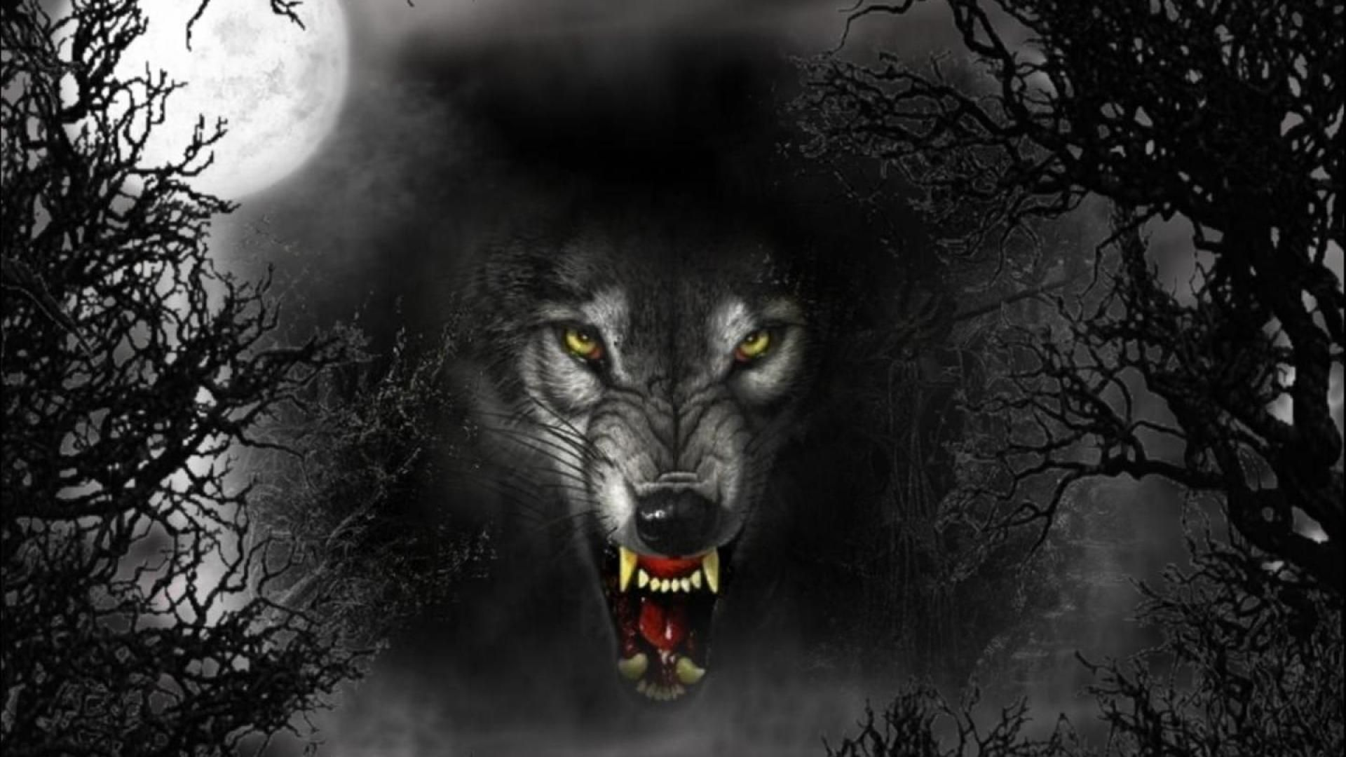 Latest 1920 1080 With Images Shadow Wolf Wolf Wallpaper