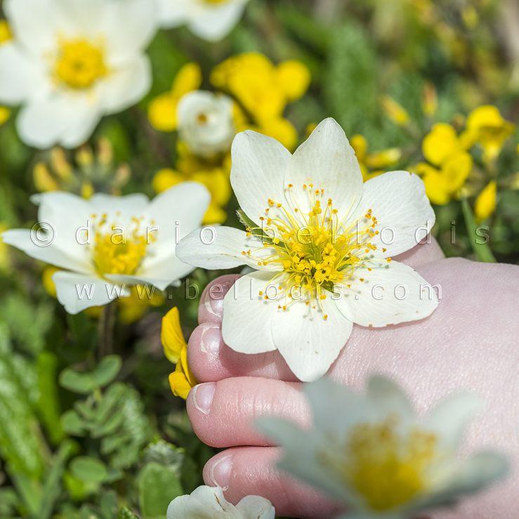 Primi passi tra i fiori