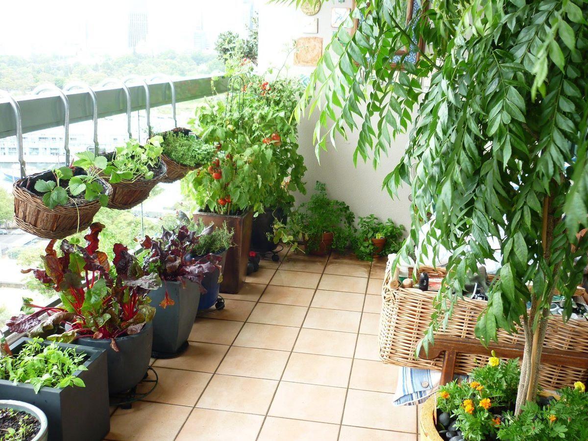 Amazing Balcony Vegetable Garden Ideas Terrace Garden Design Balcony Herb Gardens Balcony Garden Ideas Vegetables