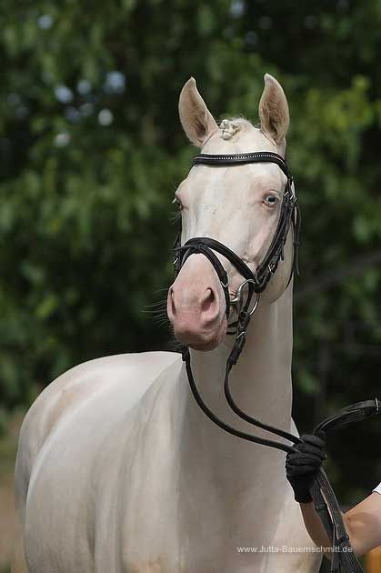 Pin On Horse Lifestyle