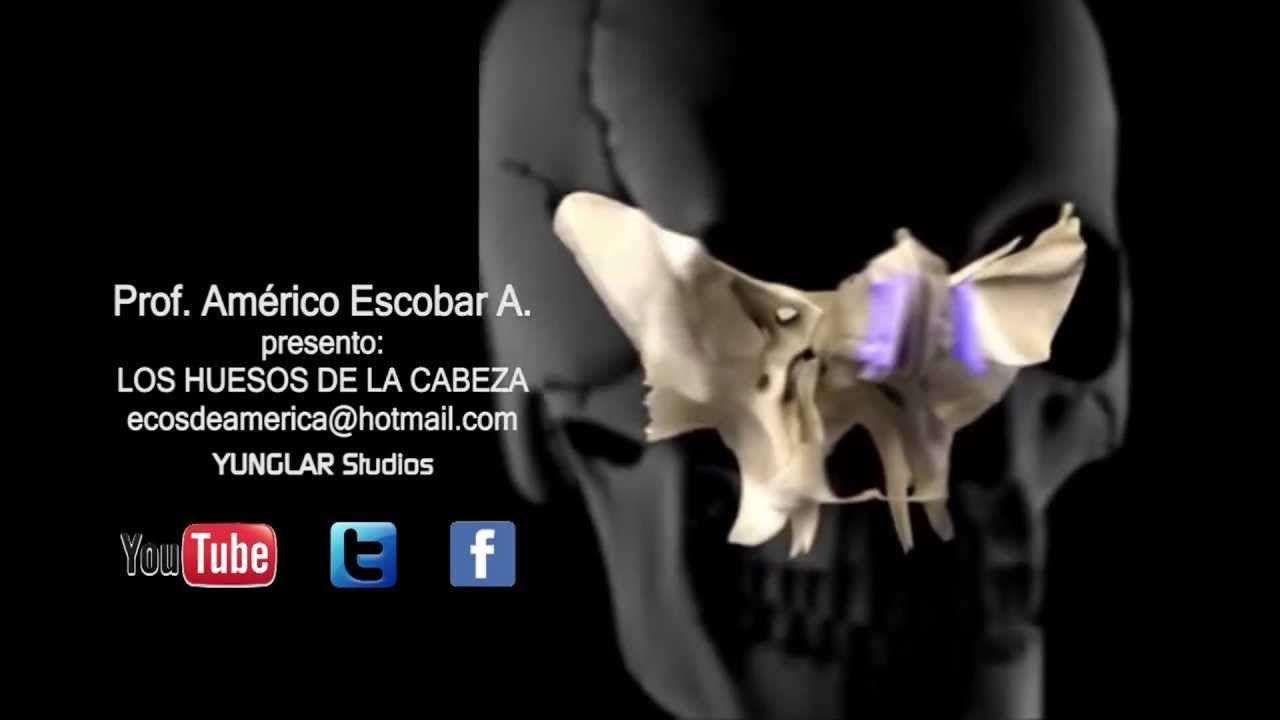 ANATOMIA - HUESOS DE LA CABEZA HD | Anatomia | Pinterest | Huesos y ...