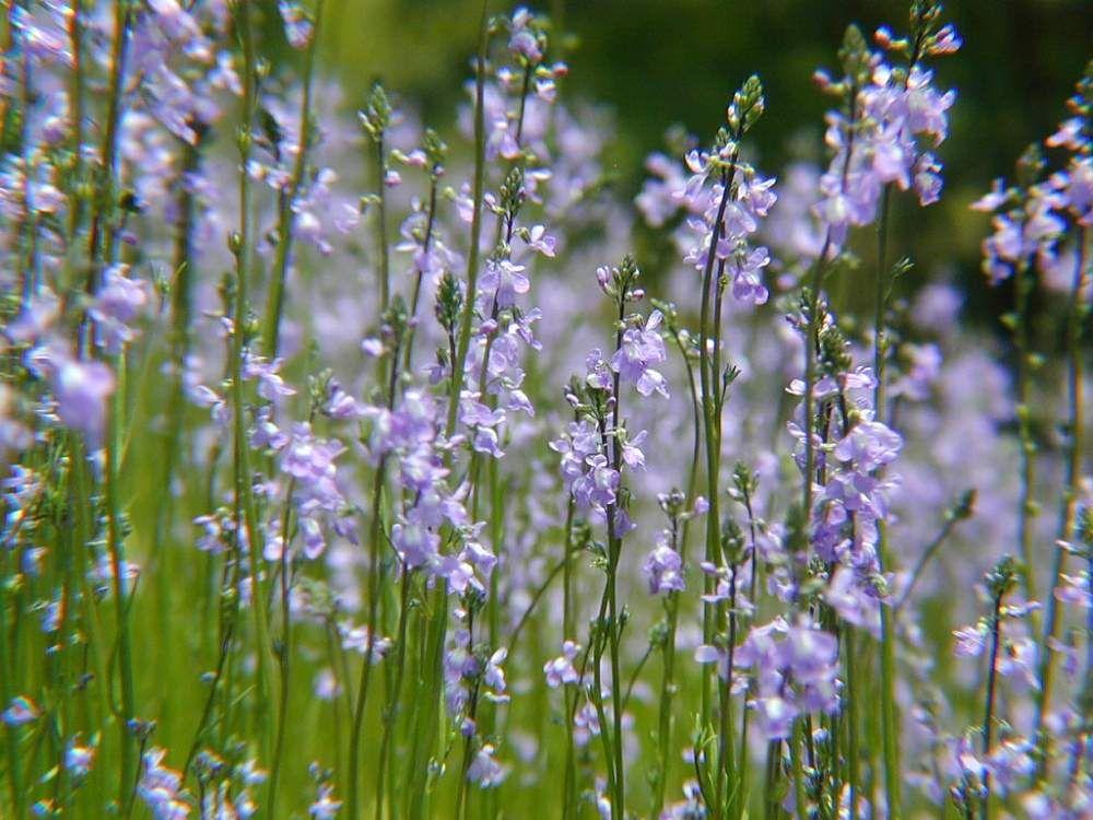 ボード Dailygreensnap 2020 06 01 オススメの植物 花の写真 のピン