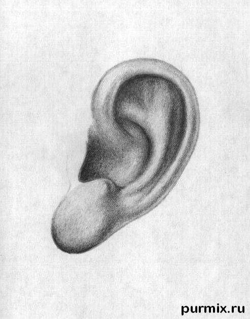 como aprender a dibujar orejas humanas 1 | moldes dibujo in 2018 ...