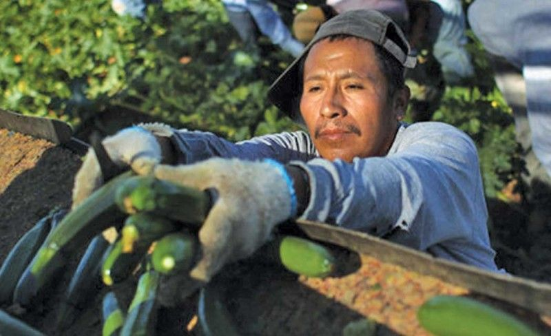 Better health services for baja farmworkers outdoors