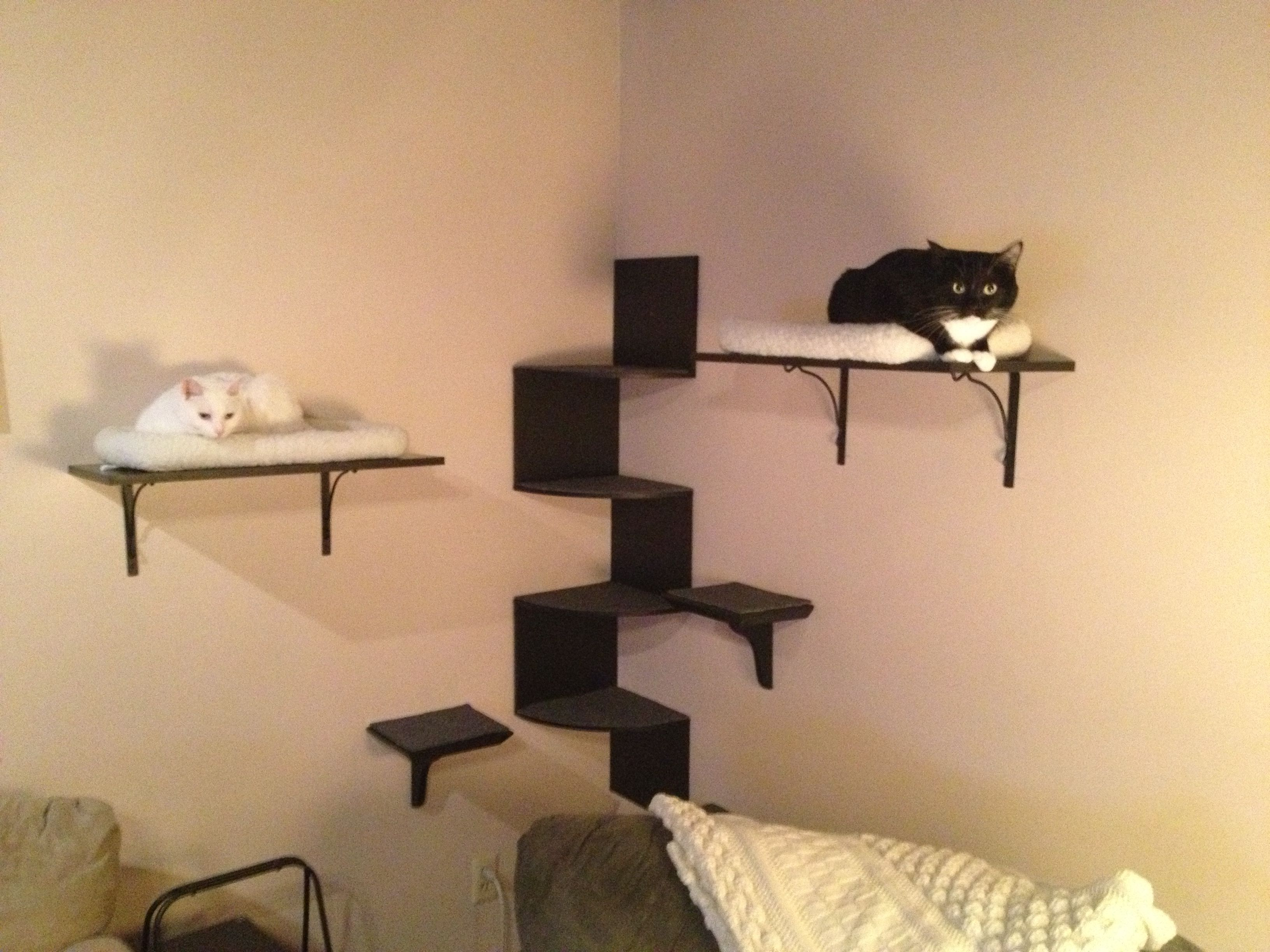 Groovy My Diy Cat Wall Cats Diy Cat Shelves Cat Shelves Cat Interior Design Ideas Tzicisoteloinfo