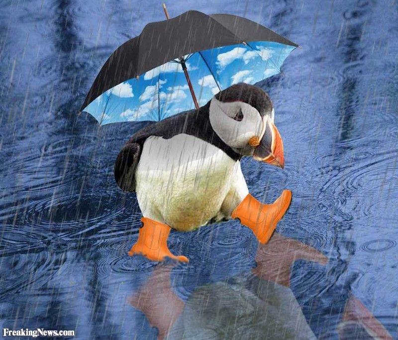 Lustige Regen Bilder