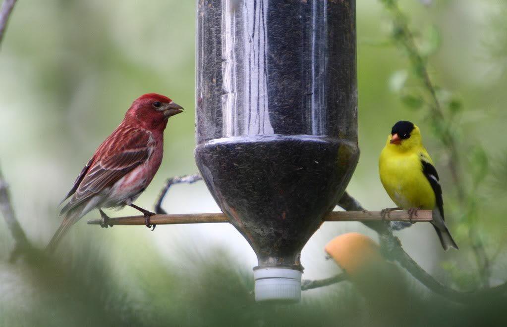 Homemade Finch Bird Feeders