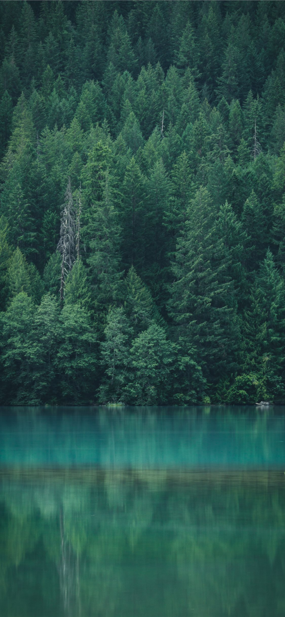 Forest Reflection At Diablo Lake Iphone 11 Wallpapers Free Download In 2020 Diablo Lake Forest Wallpaper Forest Wallpaper Iphone