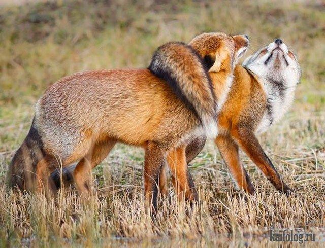 Смешные животные (45 фото) | Смешные животные, Гиеновые ...