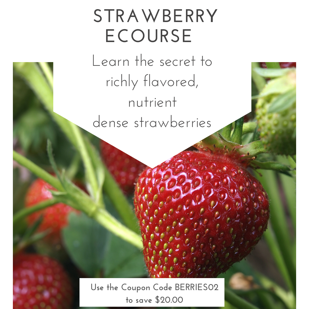 Spring Is The Perfect Time To Get Those Strawberry Plants Growing People Have Been Asking Me For Years To Teach Them In 2020 Strawberry Plants Food Garden Strawberry