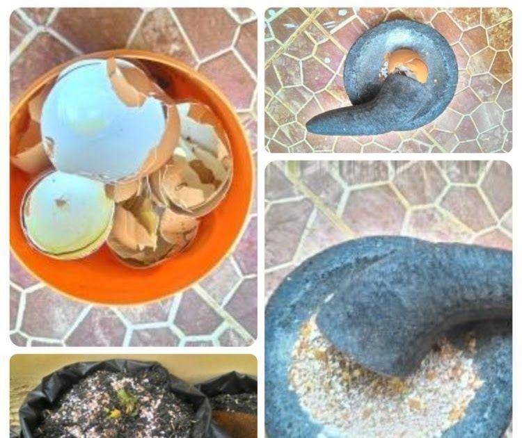 Kerajinan Tangan Dari Cangkang Telur