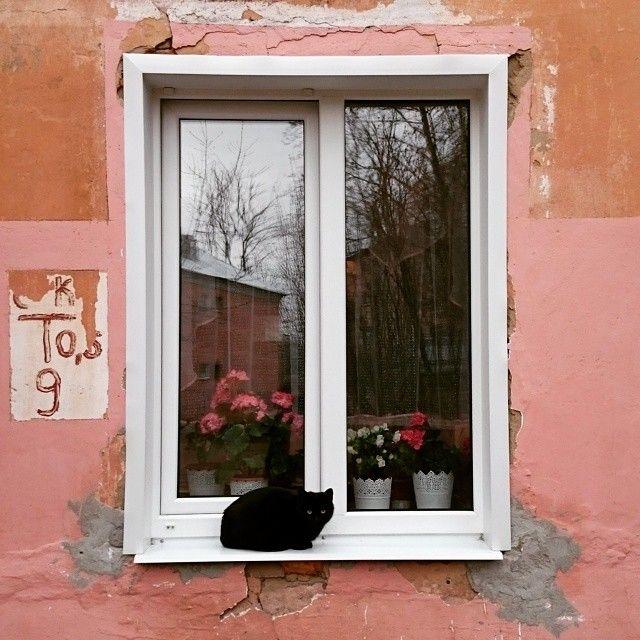 cat-in-window  via @lazzer_13 Instagram photo
