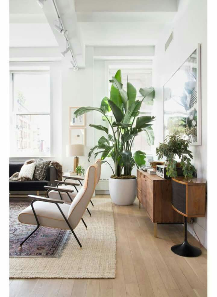 These Chairs Also Banana Tree On The Brain Living Room