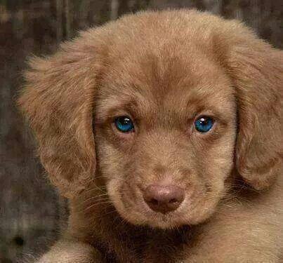 We Heart It 経由の画像 https://weheartit.com/entry/157490563 #animals #beautiful #blueeyes #brown #cute #dog #fashion #love