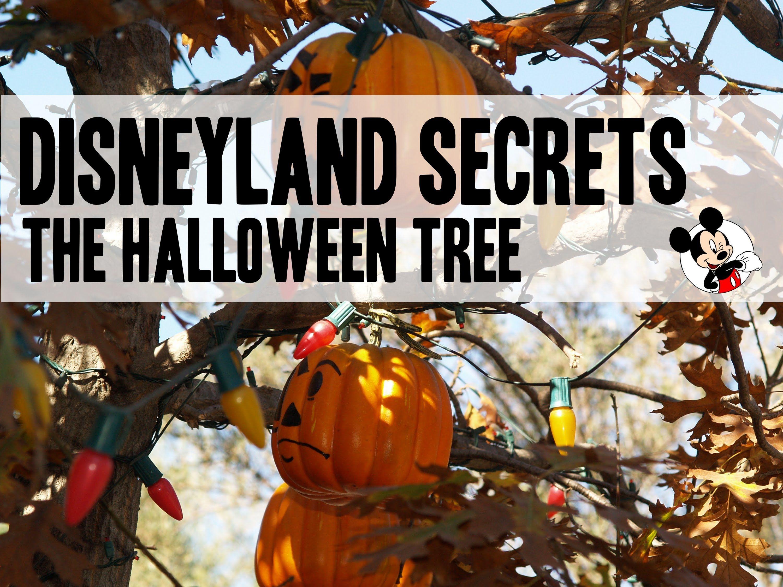 disneyland secret 7 the halloween tree - Disneyland Hours Halloween