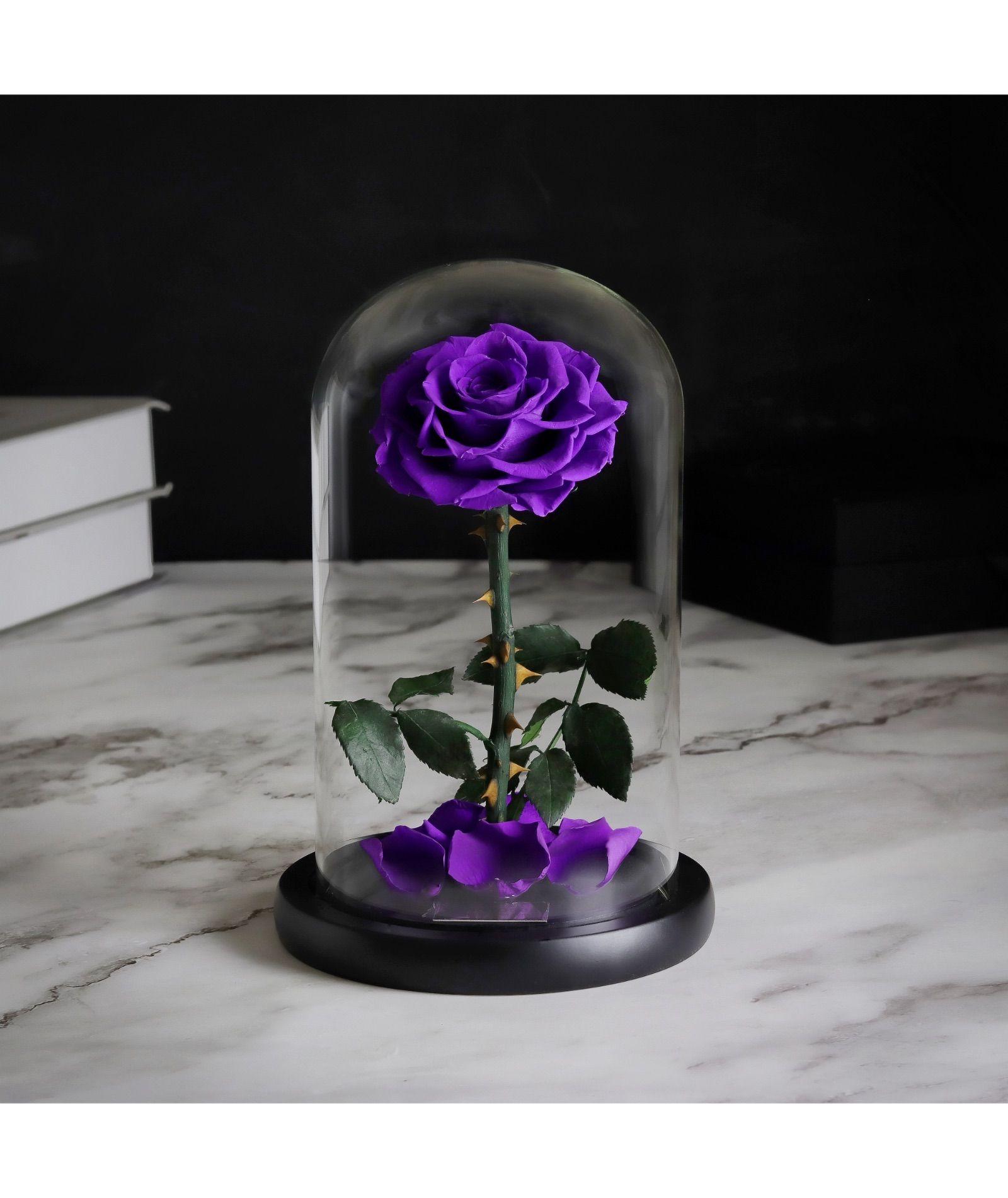 فازة ورد ايلوبا روزز طبيعي دائم يعيش لمدة سنة Vase Glass Vase Glass