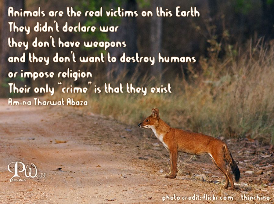 """Animals are the real victims on this earth.  They didn't declare war, they don't have weapons  and they don't want to destroy humans or impose religion. Their only """"crime"""" is that they exist. ~ Amina Tharwat Abaza ~"""