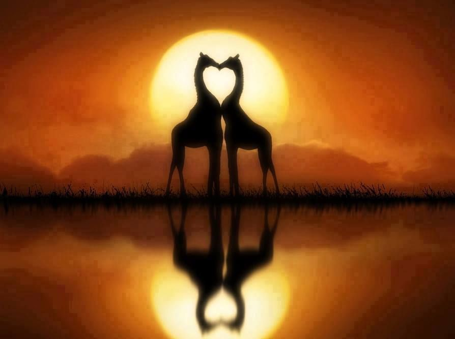 Aninimal Book: giraffe heart... | hearts | Pinterest