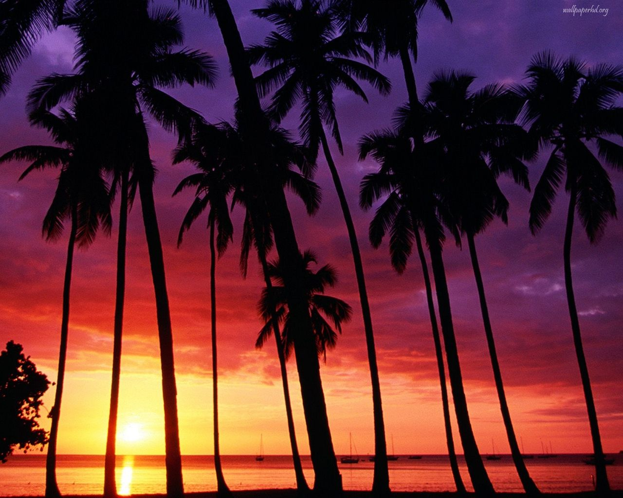 California Palm Trees Tumblr Background - wallpaper. | all ...