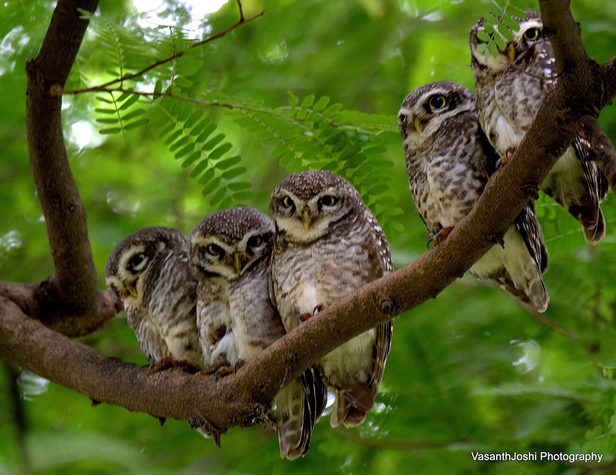 Group Owls 117
