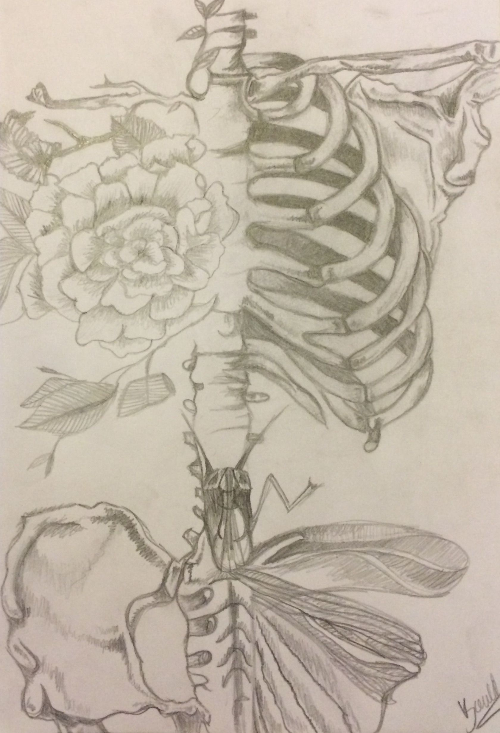 Rib cage with flowers and butterfly. Drawing by Alma Bould | My ...
