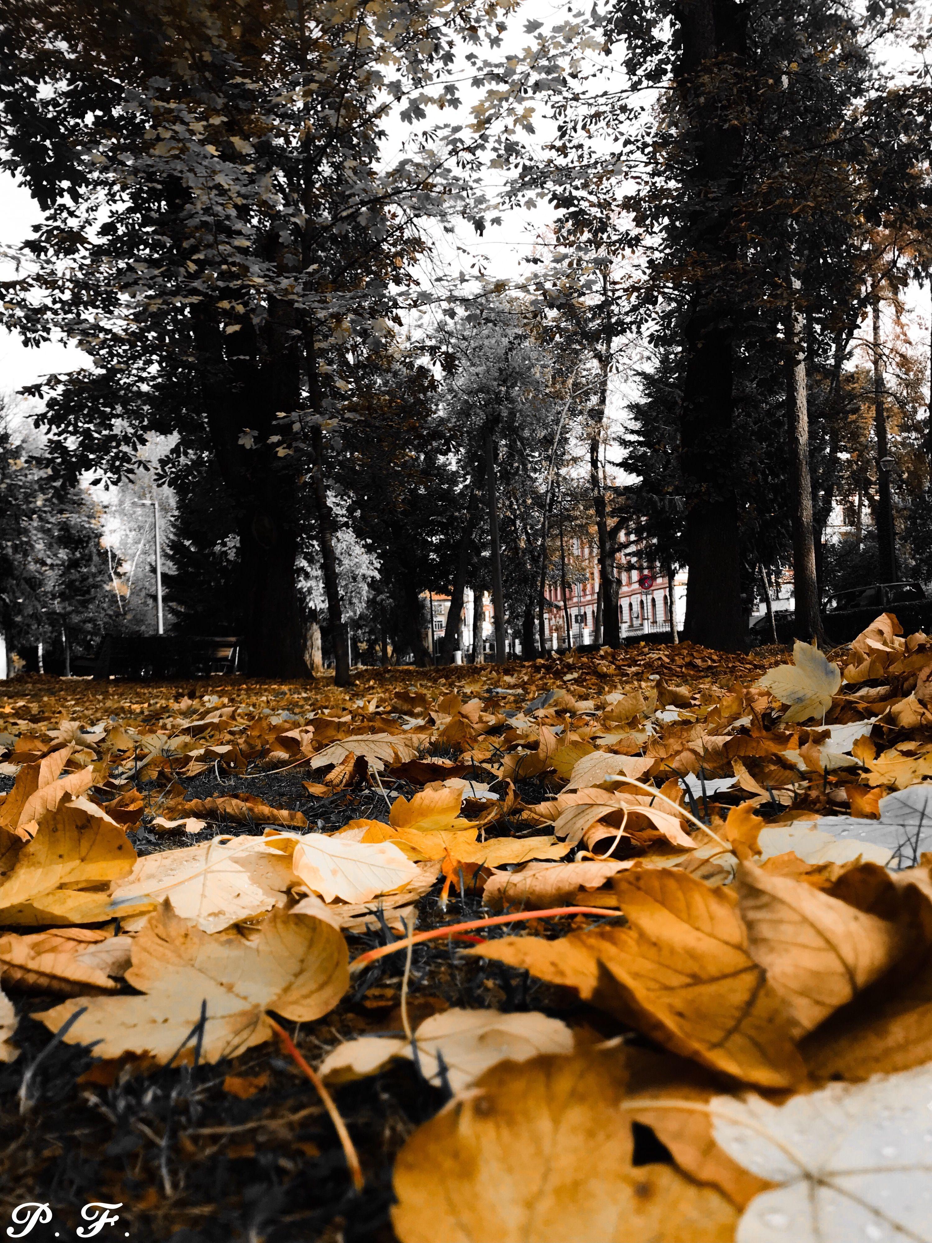 Autumn - orange and black #autumnleavesfalling