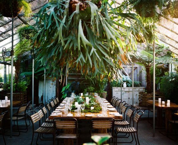 Staghorn fern wedding decor pinterest celebracion plantas y mesas staghorn fern wedding aloadofball Choice Image