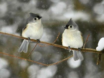 Winter Birds Wallpaper 255 Category Birds Hd Wallpapers Subcategory Birds Hd Wallpapers Beautiful Birds Bird Wallpaper Winter Bird