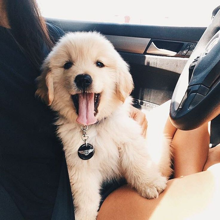 Simple Pinterest Chubby Adorable Dog - 694991592866240648faed78aaeb218a  Pictures_55745  .jpg