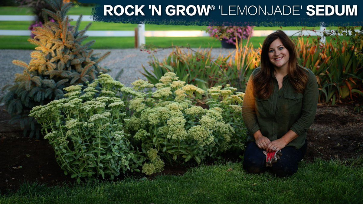 Laura LeBoutillier (GardenAnswer) Twitter Garden