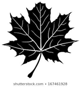 Lignende Billeder Stockfotos Og Vektorer Af Maple Leaf Drawing 133242428 Shutterstock Leaf Silhouette Maple Leaf Drawing Leaf Stencil