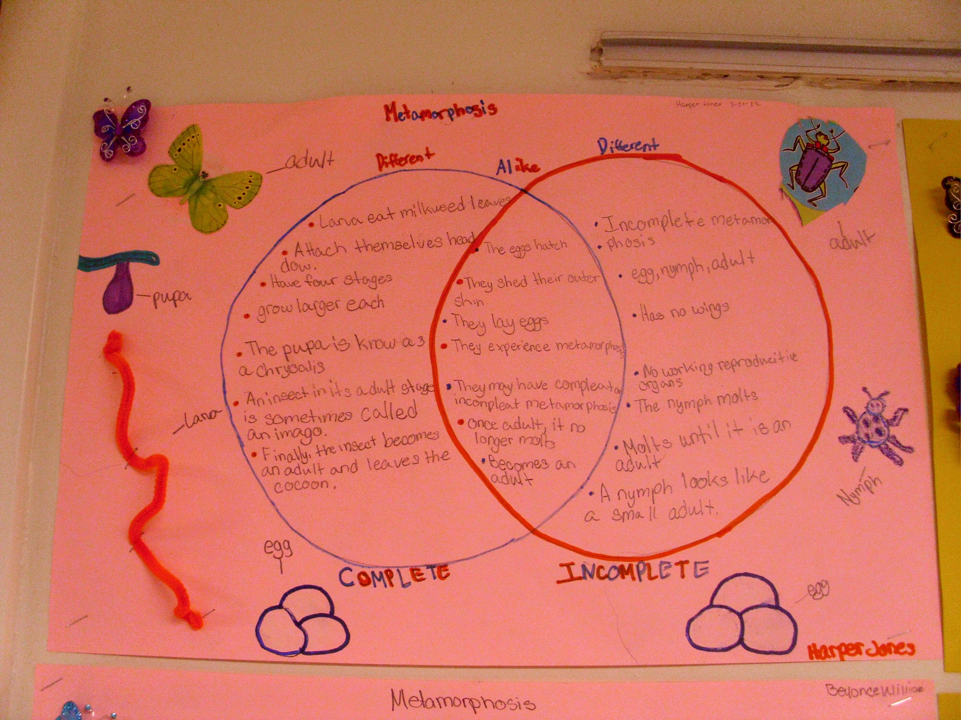 complete and incomplete metamorphosis venn diagram fourth grade science elementary science science education  [ 4000 x 3000 Pixel ]