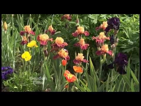 Get To Know Oregon Keizer Iris Fest Iris Garden Rainbow Flowers Iris