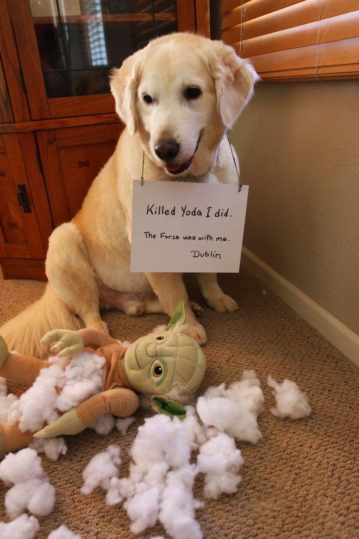 14 Shameful Dogs Who Have Been Caught Misbehaving Dog Shaming