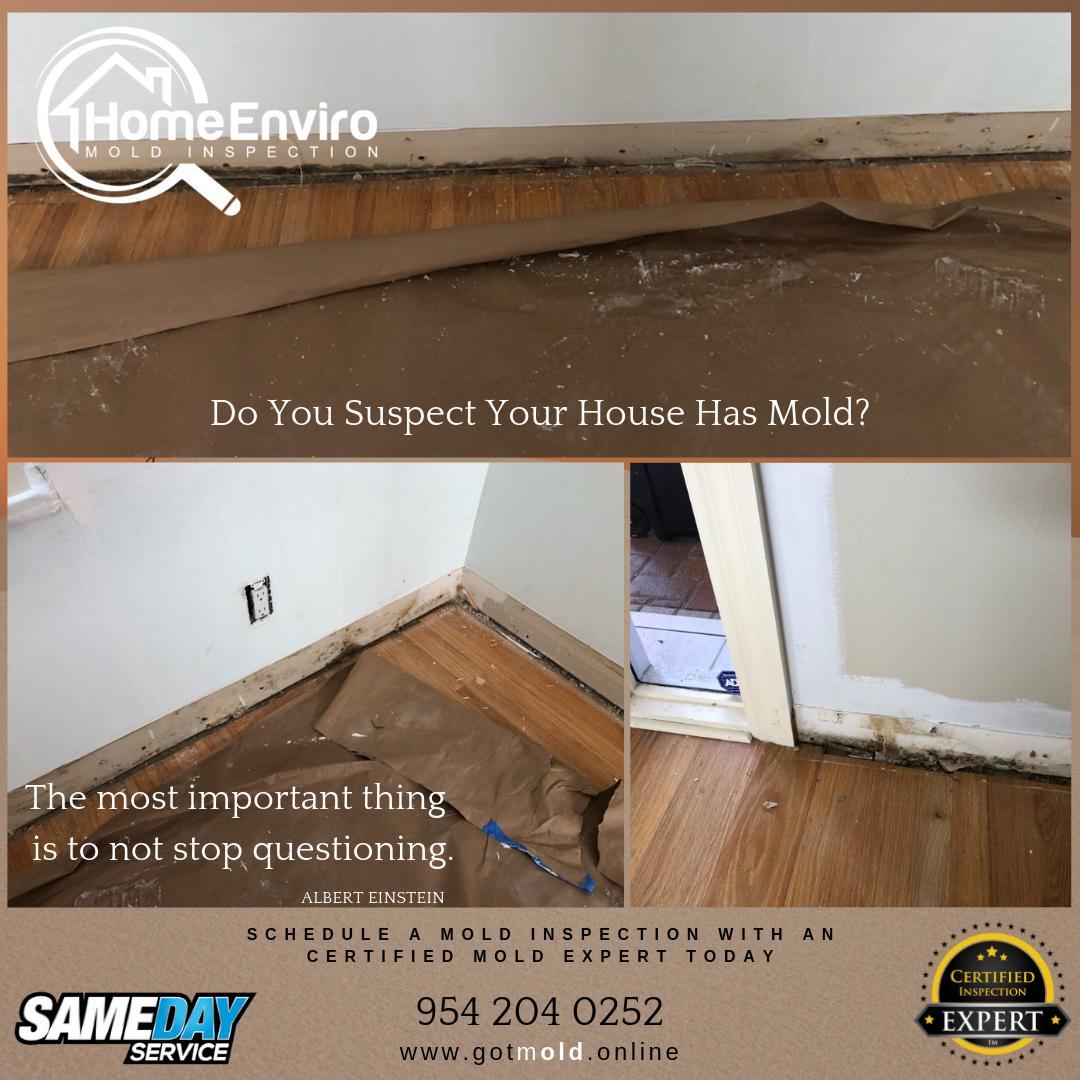 MOLD mold_inspection mold_removal