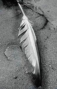 Photograph - Seagull Feather by Expressionistart studio Priscilla Batzell