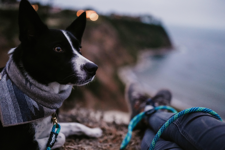 Adventure Inspiration Dog Photography Wanderlust Dog Training