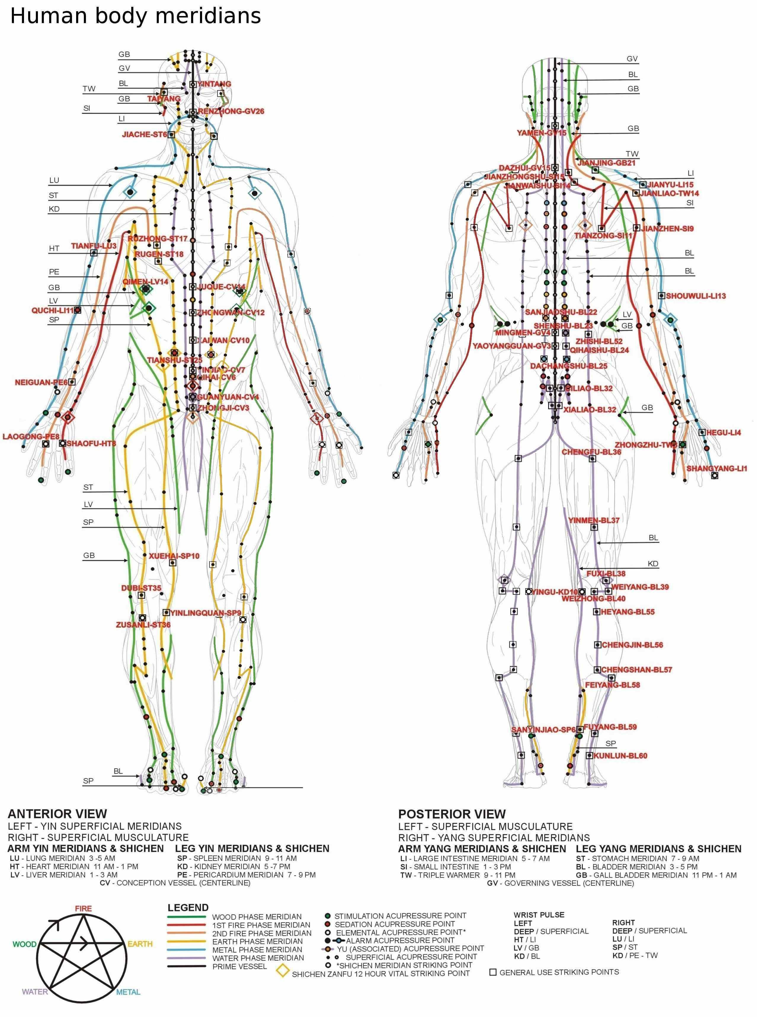 Human body meridian chart the nervous system human body human body meridian chart the nervous system ccuart Choice Image