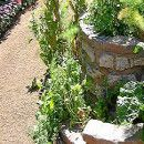 Las plantas adventicias y el huerto   ECOagricultor