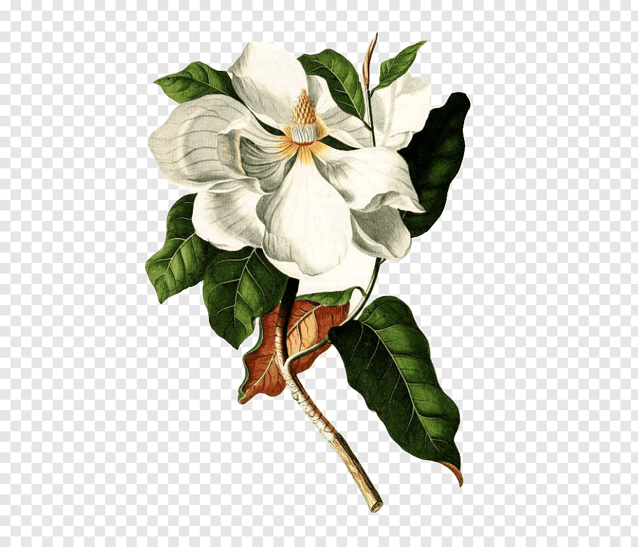 Flower Vy Tuzki White Flowers With Green Leaves And Stem Illustration Png Yellow Rose Flower Purple Flowers White Jasmine Flower