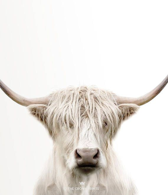 Highland Cow Print Printable Art Cow Art Trendy Wall Art Animal Photography The Crown Prints Large Wall Art Wall Art For Bedroom Billeder Fantastiske Dyr Og Sjove Dyr