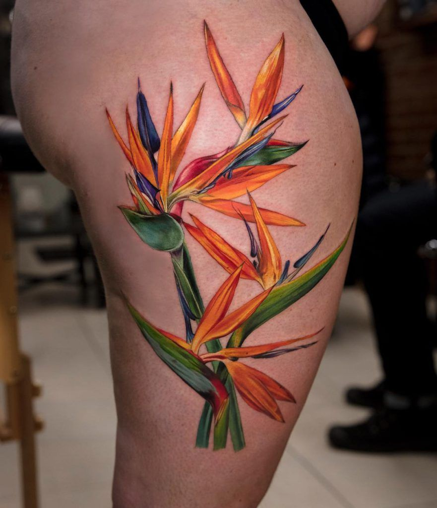 Pin by Meredith Cook on Tattoo ideas Bird of paradise