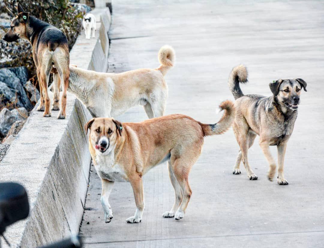 #dog #dogs #puppy #pup #pet #pets #animal #animals #pendik #cute #mutluhayvan #petstagram #petsagram #dogsitting #...
