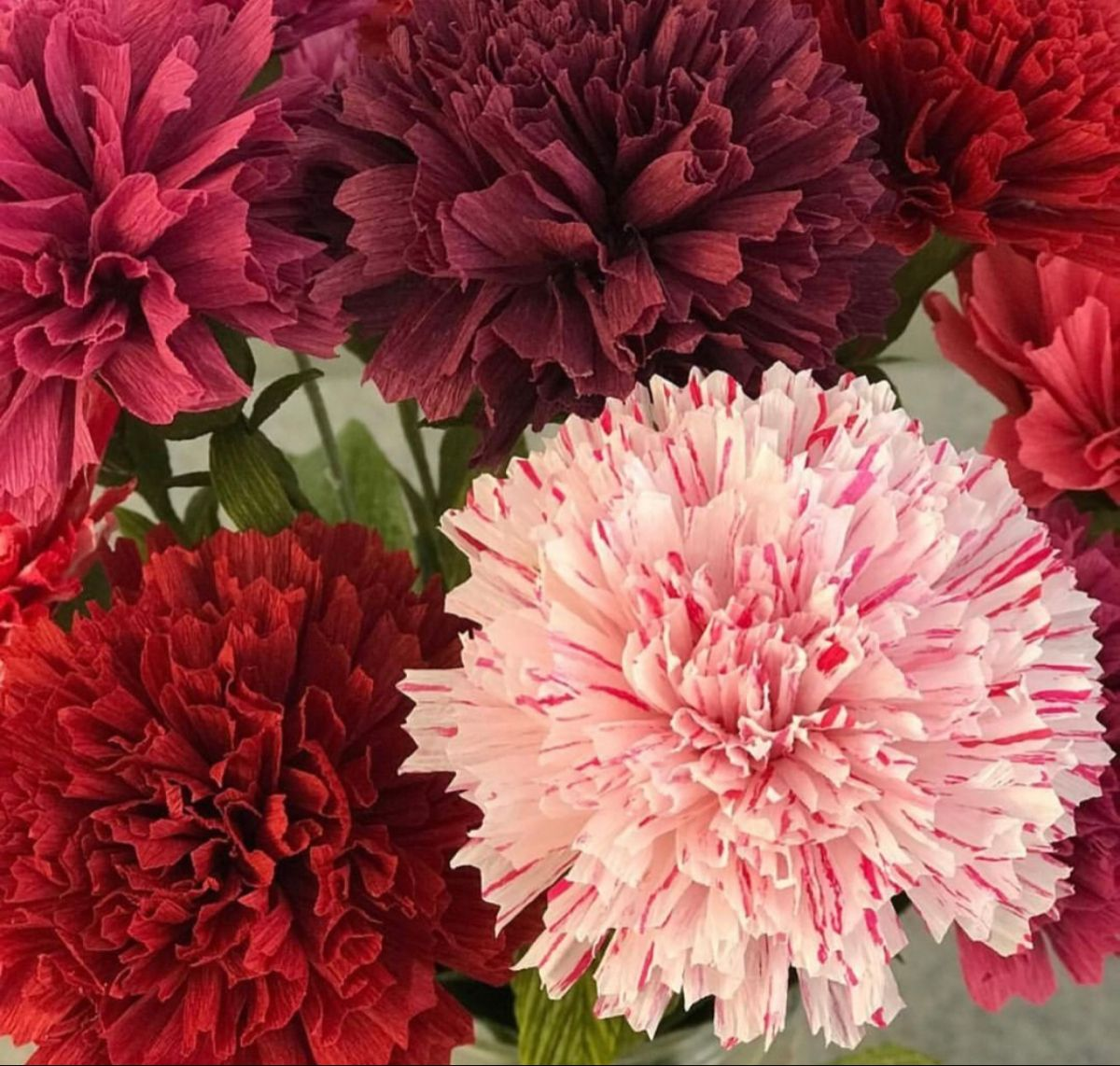 Carnations Near Me In 2020 Carnation Flower Flowers Flowers For Sale