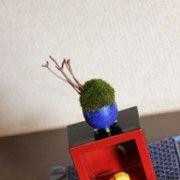 超ミニ盆栽のブログの画像
